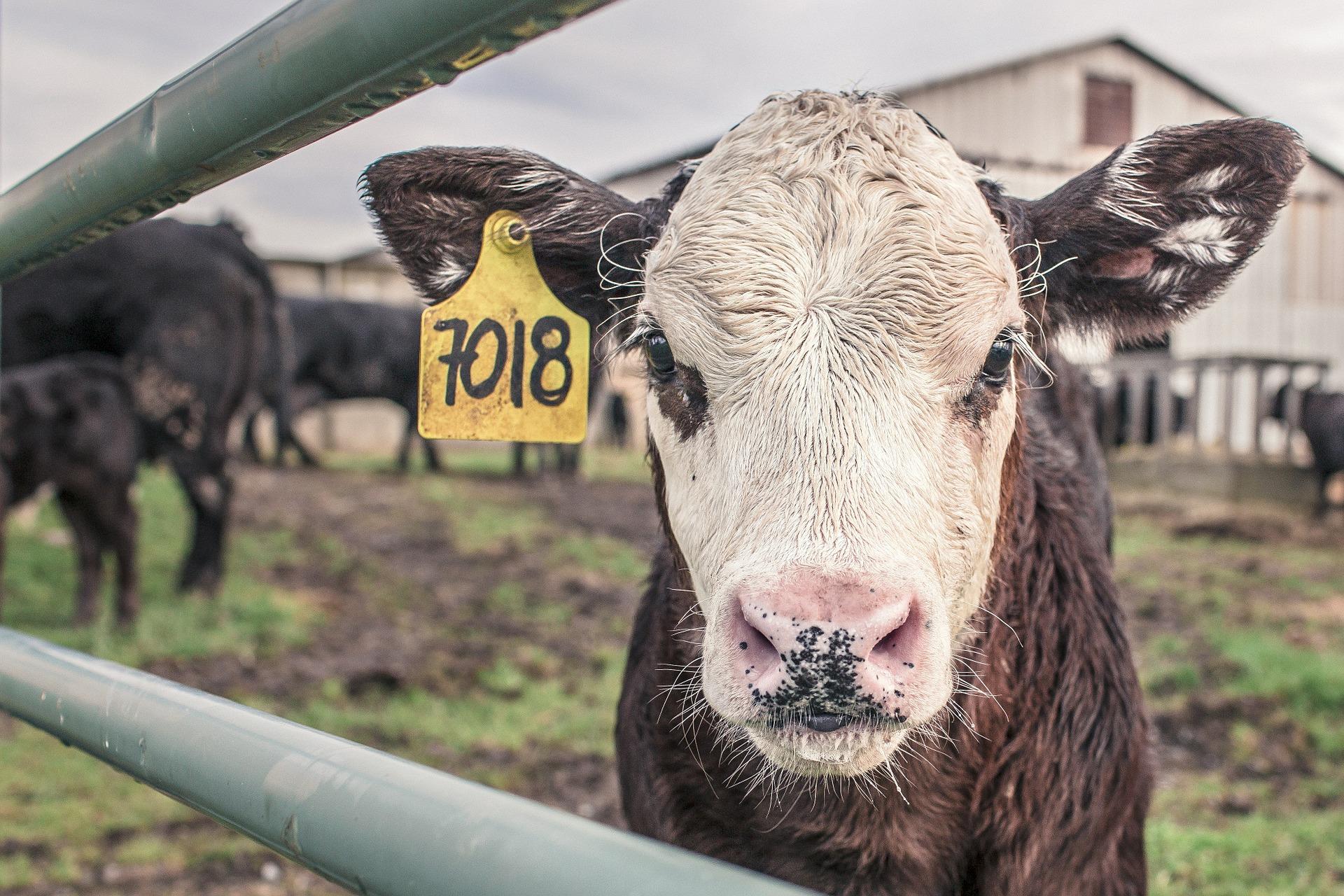 Find din nye høhæk eller staldindretning til køer hos Dan Egtved og få topkvalitet