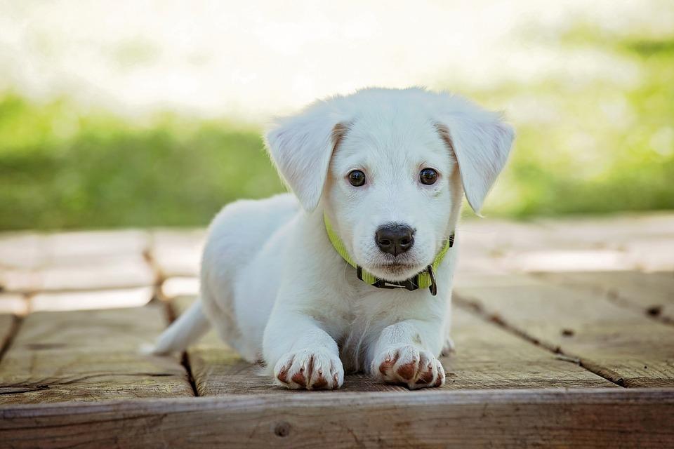 Find sund og naturlig mad til hunde og hvalpe på www.hike.dk