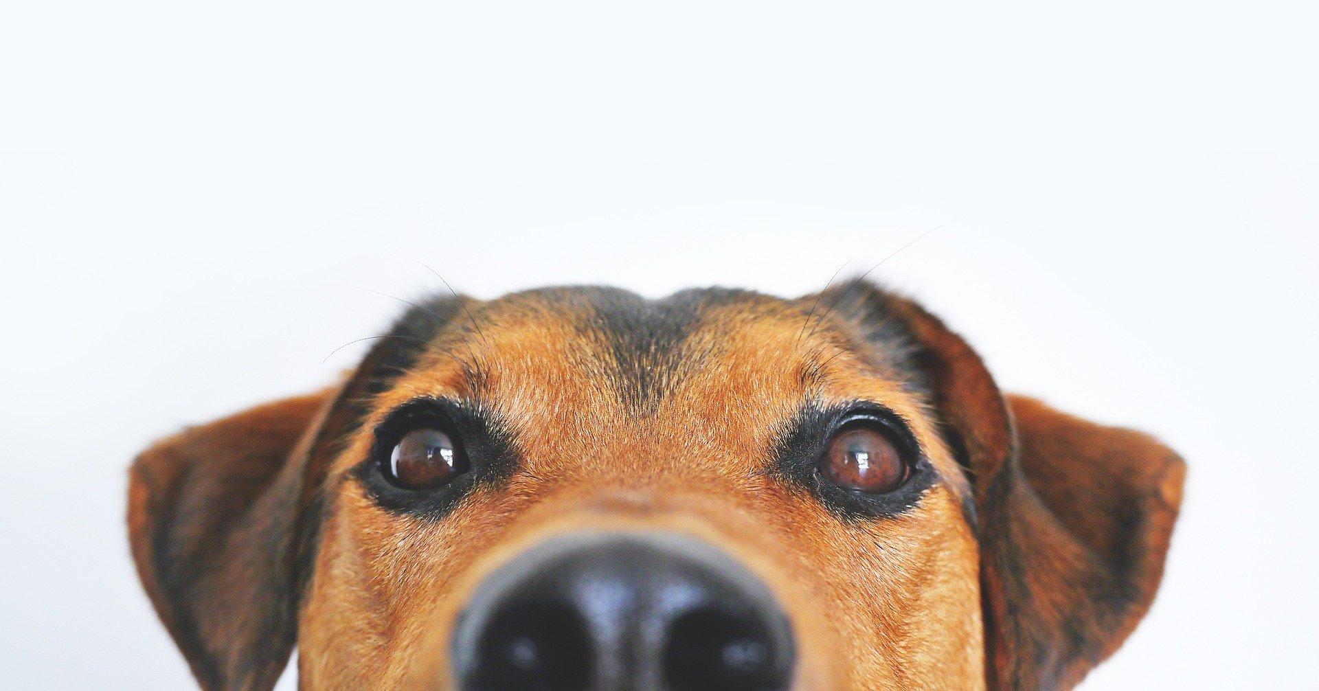 Kosttilskud og foder til hunde i naturlig kvalitet – WinnerPlus